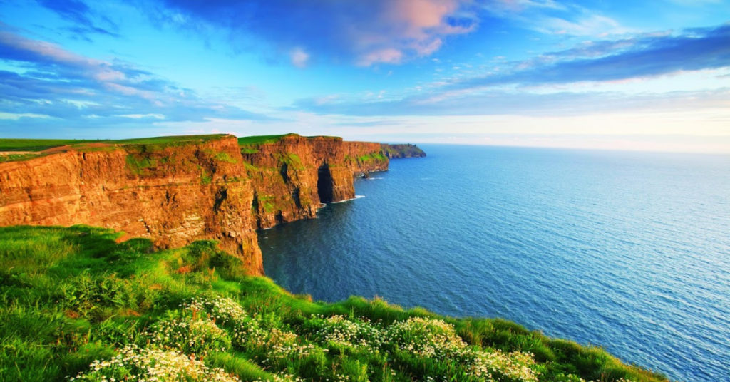 Evening daisies at the Cliffs of Moher, Co Clare, Ireland.