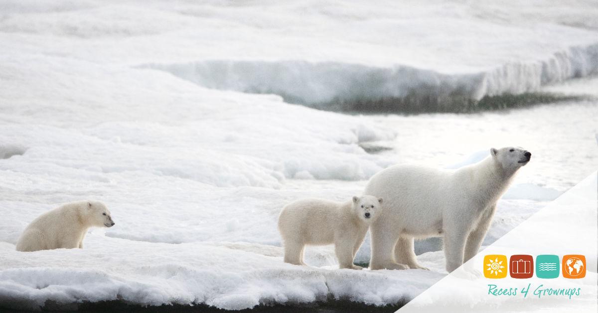 Ice Cruising, Arctic, Polar Bear, Animal, Wildlife